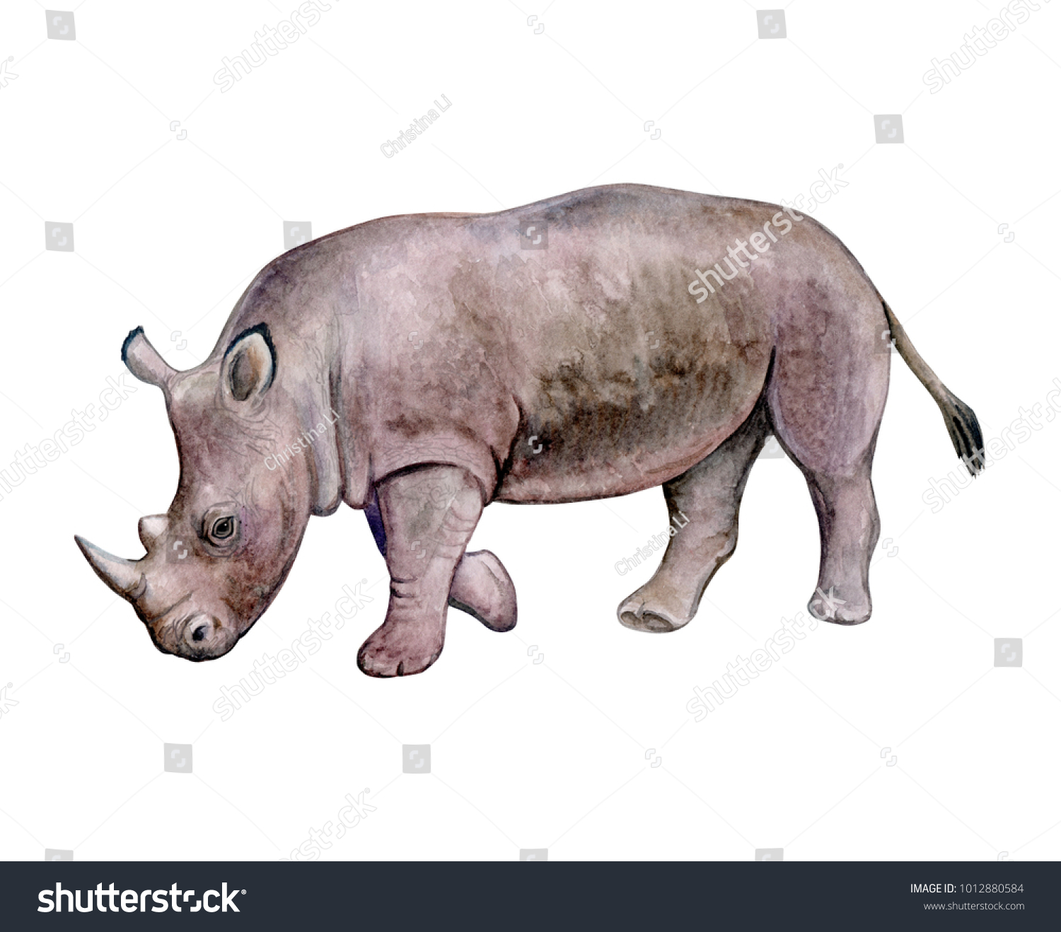 hight resolution of rhinoceros rhino isolated on white background watercolor illustration template clipart handmade