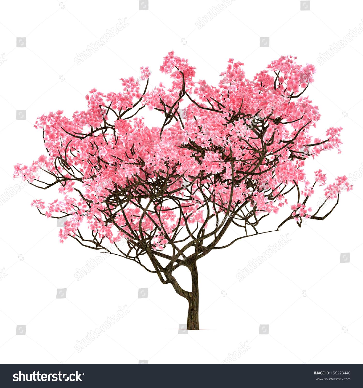 diagram the parts of cherry blossom tree 2002 ford f350 fuse box sakura isolated stock illustration 156228440