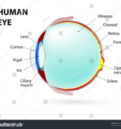 schematic diagram of the eye human anatomy labeled [ 1500 x 1396 Pixel ]