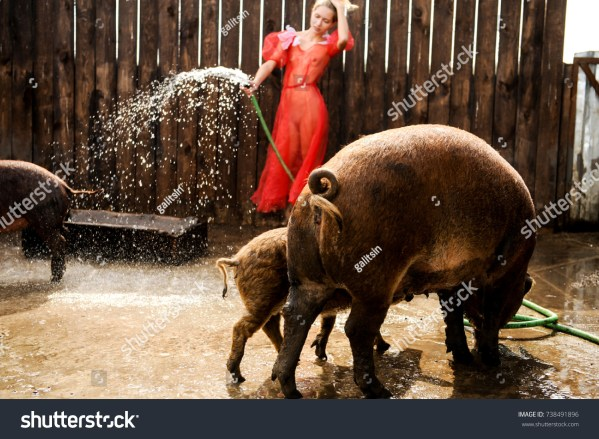 Swine Farm news photos Jenny Galitsin Shutterstock