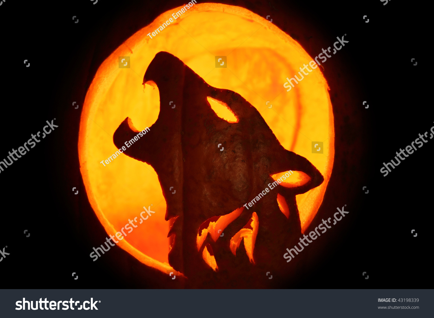 Silhouette Of Halloween Pumpkin Carved Into Howling Wolf Pattern Jack O Lantern Stock Photo