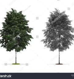 pics for gt silver birch tree red birch tree types of birch trees [ 1500 x 1260 Pixel ]