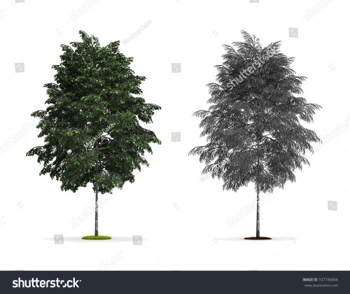 small resolution of pics for gt silver birch tree red birch tree types of birch trees