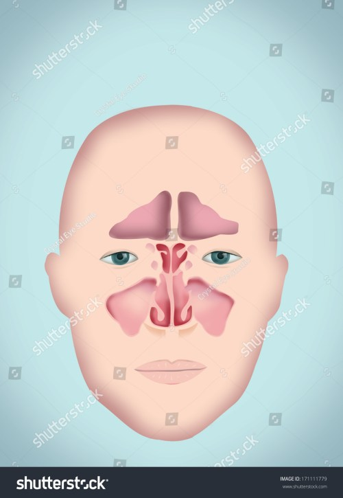 small resolution of sinus diagram human anatomy without labels version