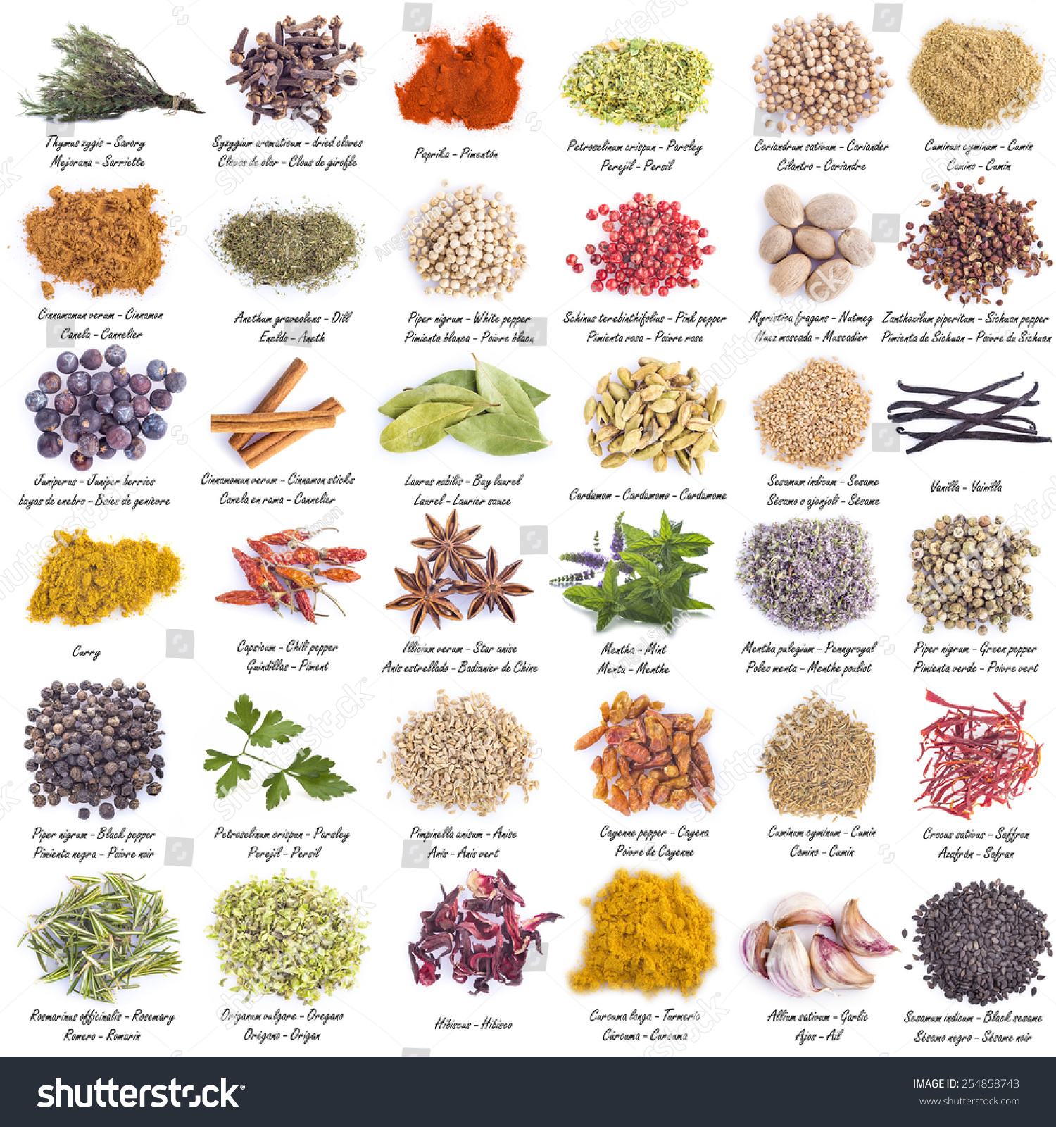 Spices Set Great Assortment Isolated On Stock Photo