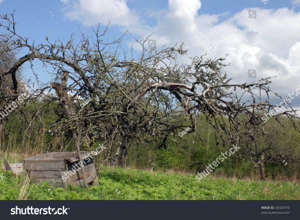 Spooky Dead Apple Tree And Ruined Hive Stock