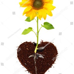 Plant Stem Diagram Worksheet Bulldog Security Wiring Diagrams Sunflower Roots Pictures To Pin On Pinterest - Thepinsta