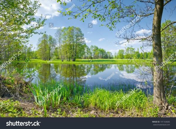 sunny spring landscape. trees
