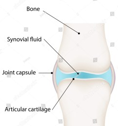 synovial joint diagram [ 1143 x 1600 Pixel ]