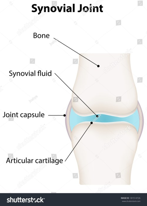 small resolution of synovial joint diagram