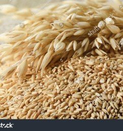 whole grains of oats and oat spikelets  [ 1500 x 1102 Pixel ]
