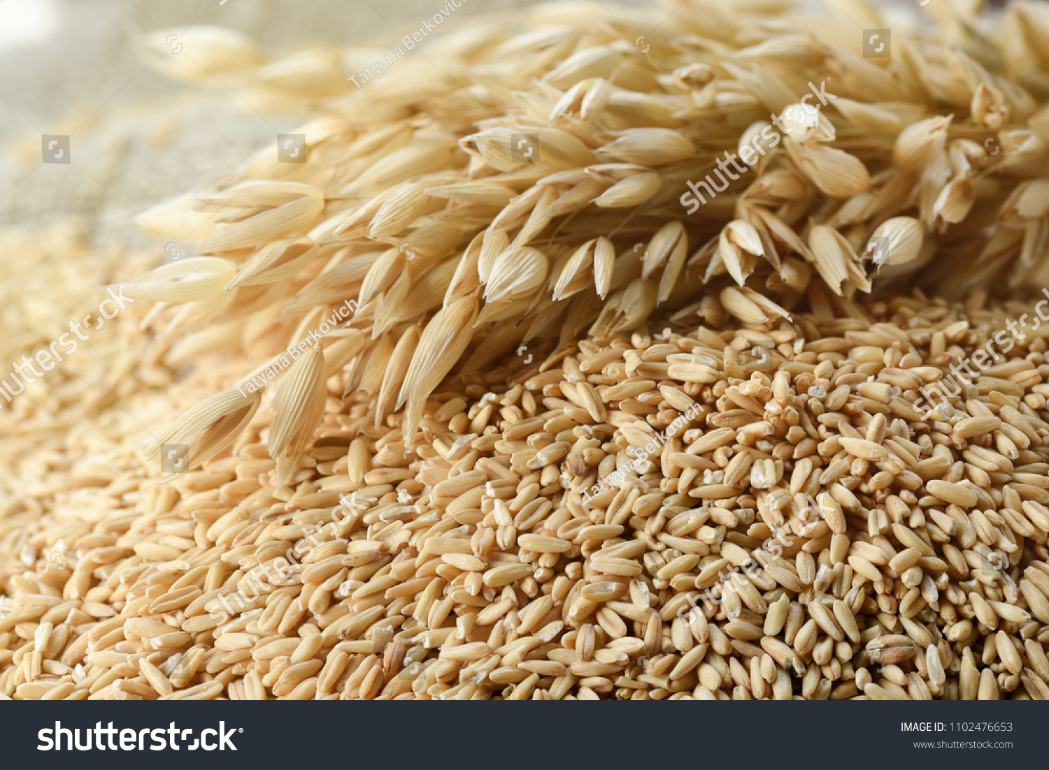 hight resolution of whole grains of oats and oat spikelets
