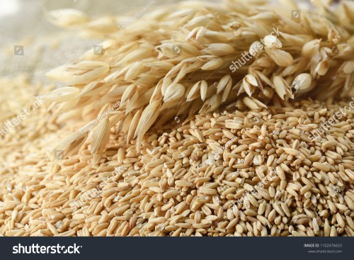 small resolution of whole grains of oats and oat spikelets