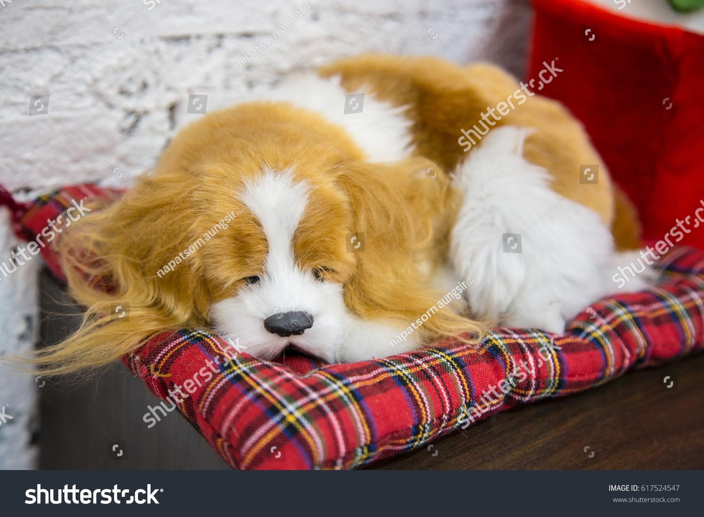 https www shutterstock com image photo dog sleeping on scottish pillow background 617524547