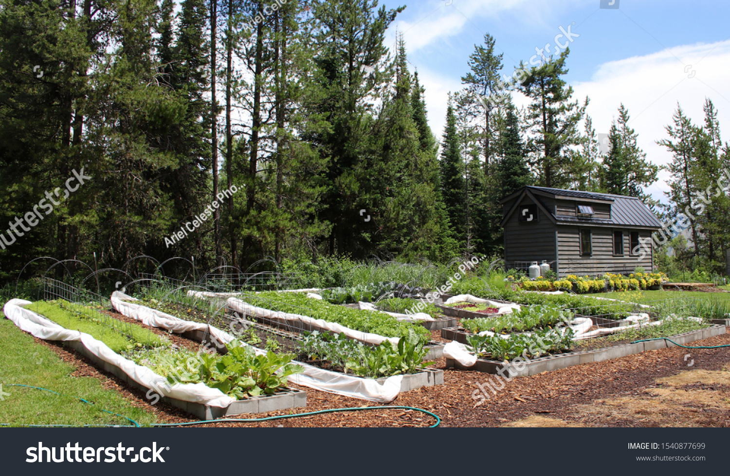 Tiny House Large Garden Woods Stock Photo Edit Now 1540877699