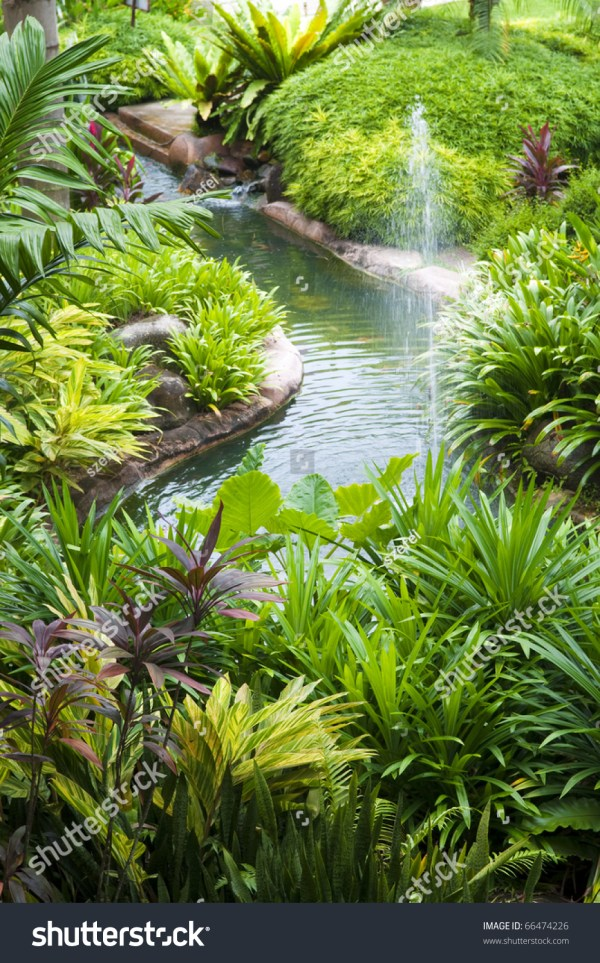 tropical garden pond and plants