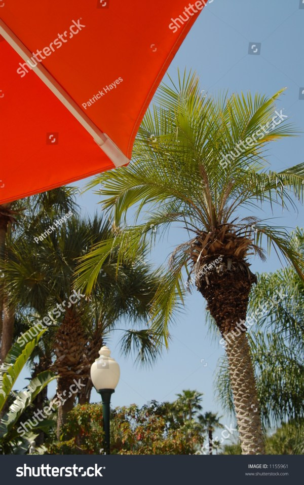 Umbrella In Front Of Palm Tree Stock 1155961