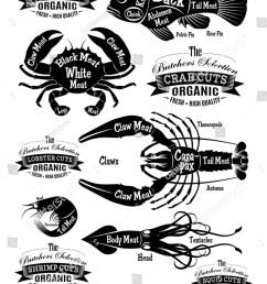 vector set of diagram cut carcasses seafood [ 1077 x 1600 Pixel ]