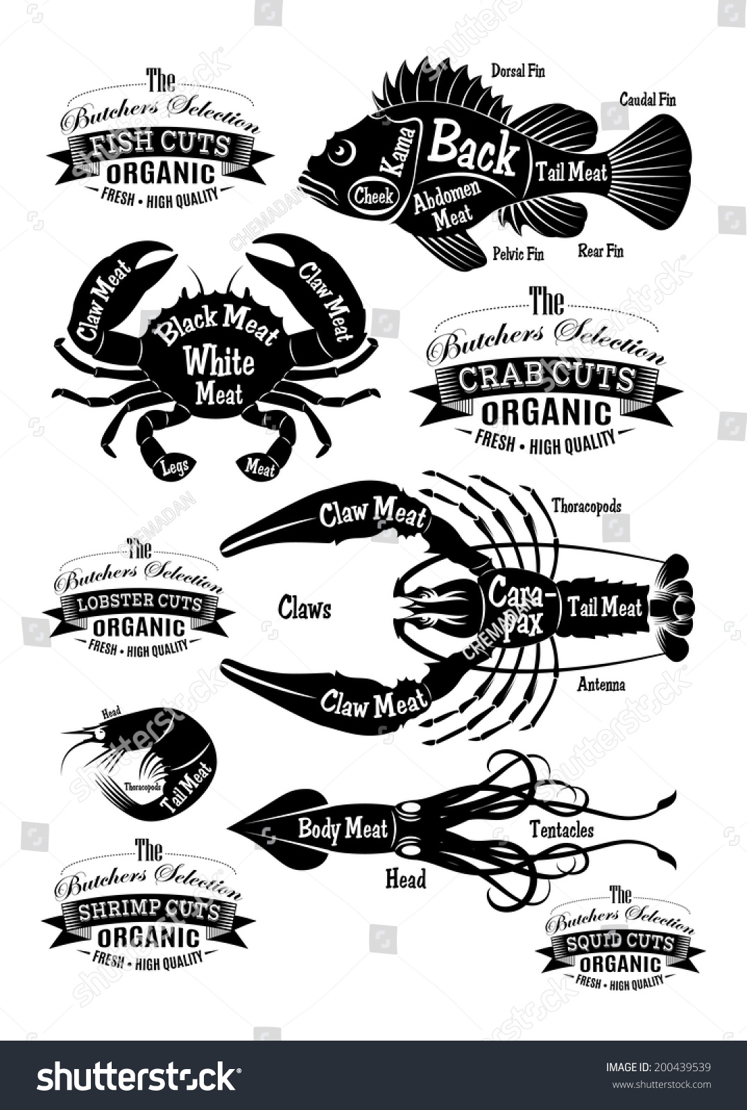 hight resolution of vector set of diagram cut carcasses seafood