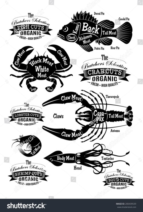 small resolution of vector set of diagram cut carcasses seafood