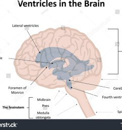 ventricles in the brain labeled diagram  [ 1500 x 1200 Pixel ]