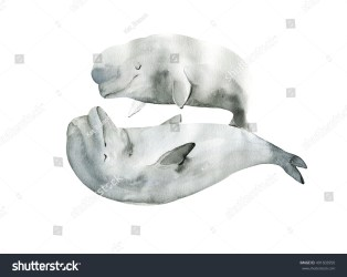Watercolor Beluga Whale Dolphin Painting Hand Stock Illustration 491603950