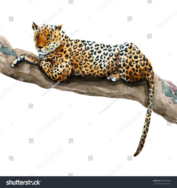 Watercolor Illustration Leopard Lying Tree Jungle Stock