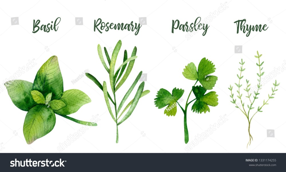 medium resolution of watercolor kitchen herbs basil rosemary parsley thyme