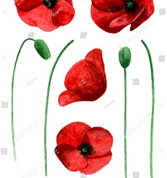 watercolor poppy clip art red flowers clipart [ 1064 x 1600 Pixel ]