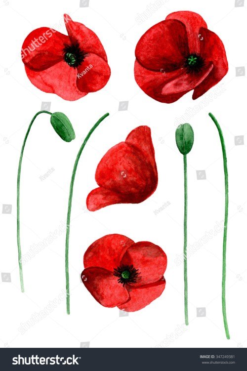 small resolution of watercolor poppy clip art red flowers clipart