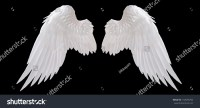 White Angel Wing Isolated Stock Photo 192058784 - Shutterstock