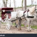 White Horse Cart Used Wedding Transportation Stock Photo Edit Now 1334468138