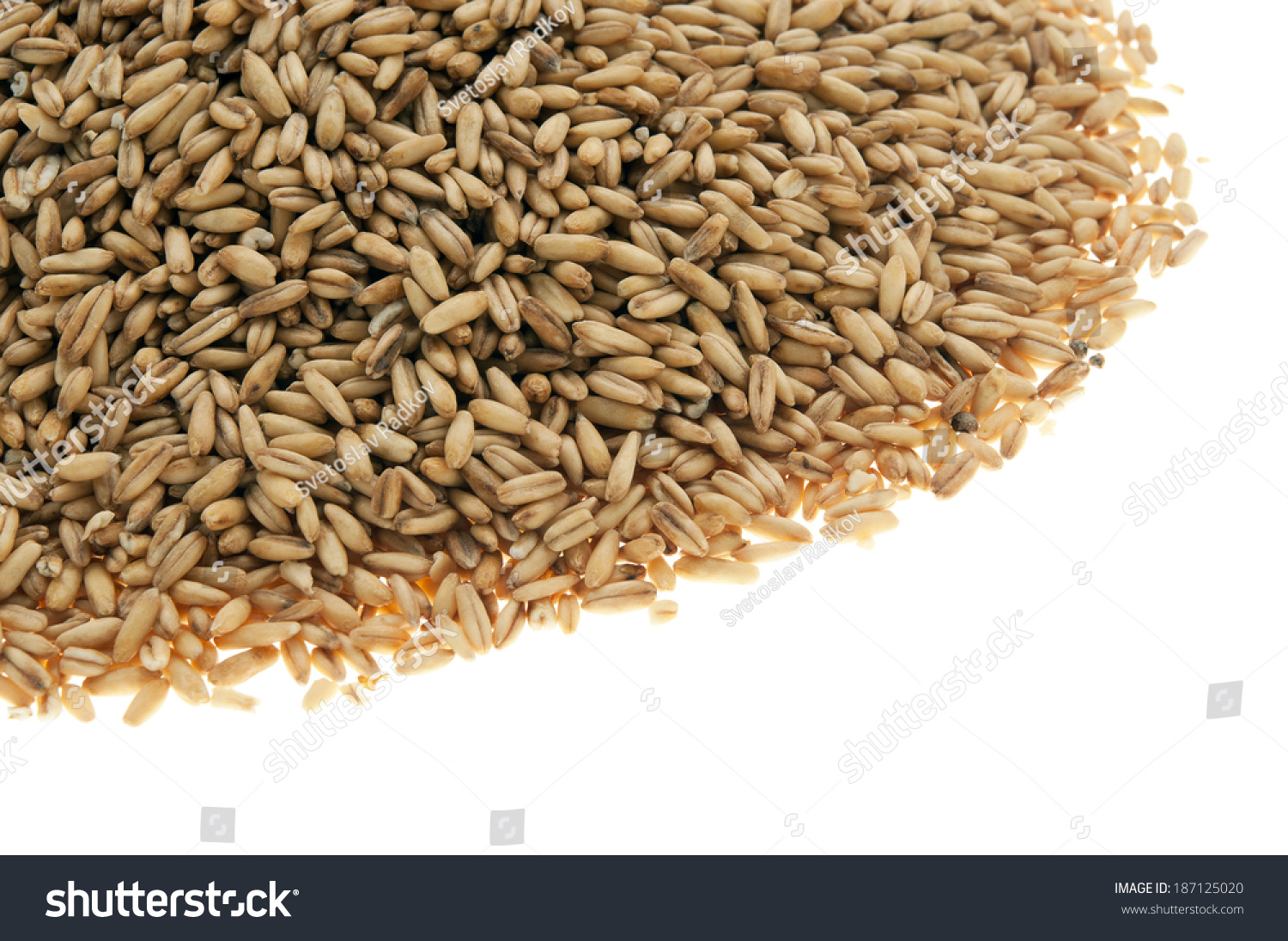 hight resolution of whole oat groats grains kernels seeds berries a nutritious whole grain they are oats from which only the inedible outer hull has been removed