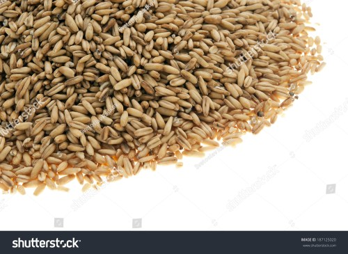 small resolution of whole oat groats grains kernels seeds berries a nutritious whole grain they are oats from which only the inedible outer hull has been removed