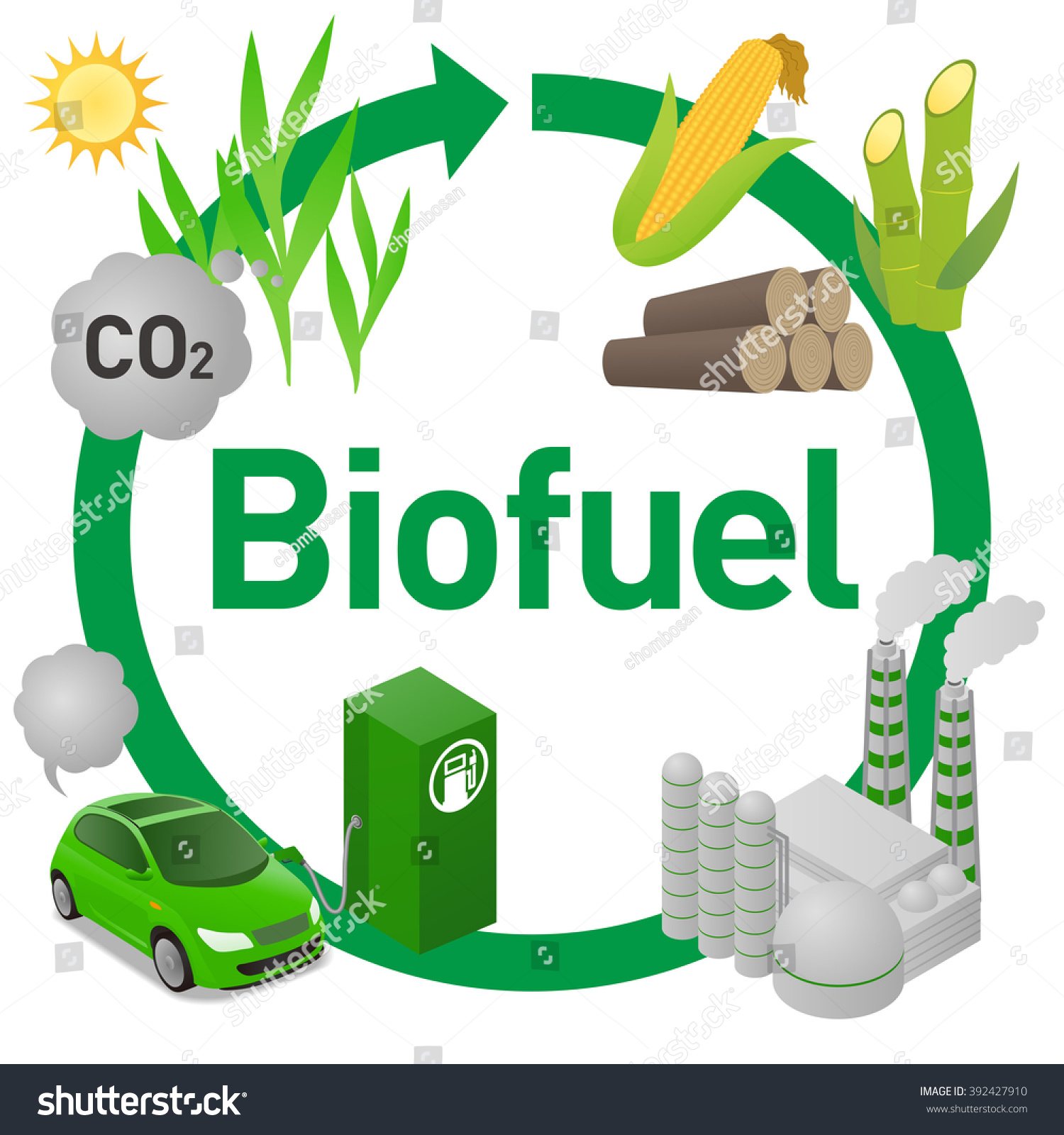 corn plant life cycle diagram 2006 ford e350 brake light wiring biofuel biomass ethanol stock vector