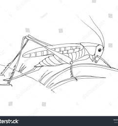grasshopper is preparing to jump  [ 1500 x 1267 Pixel ]