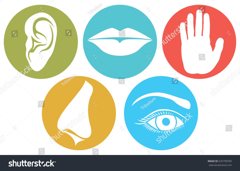 5 Senses Smell Touch Hearing Taste Stock Vector