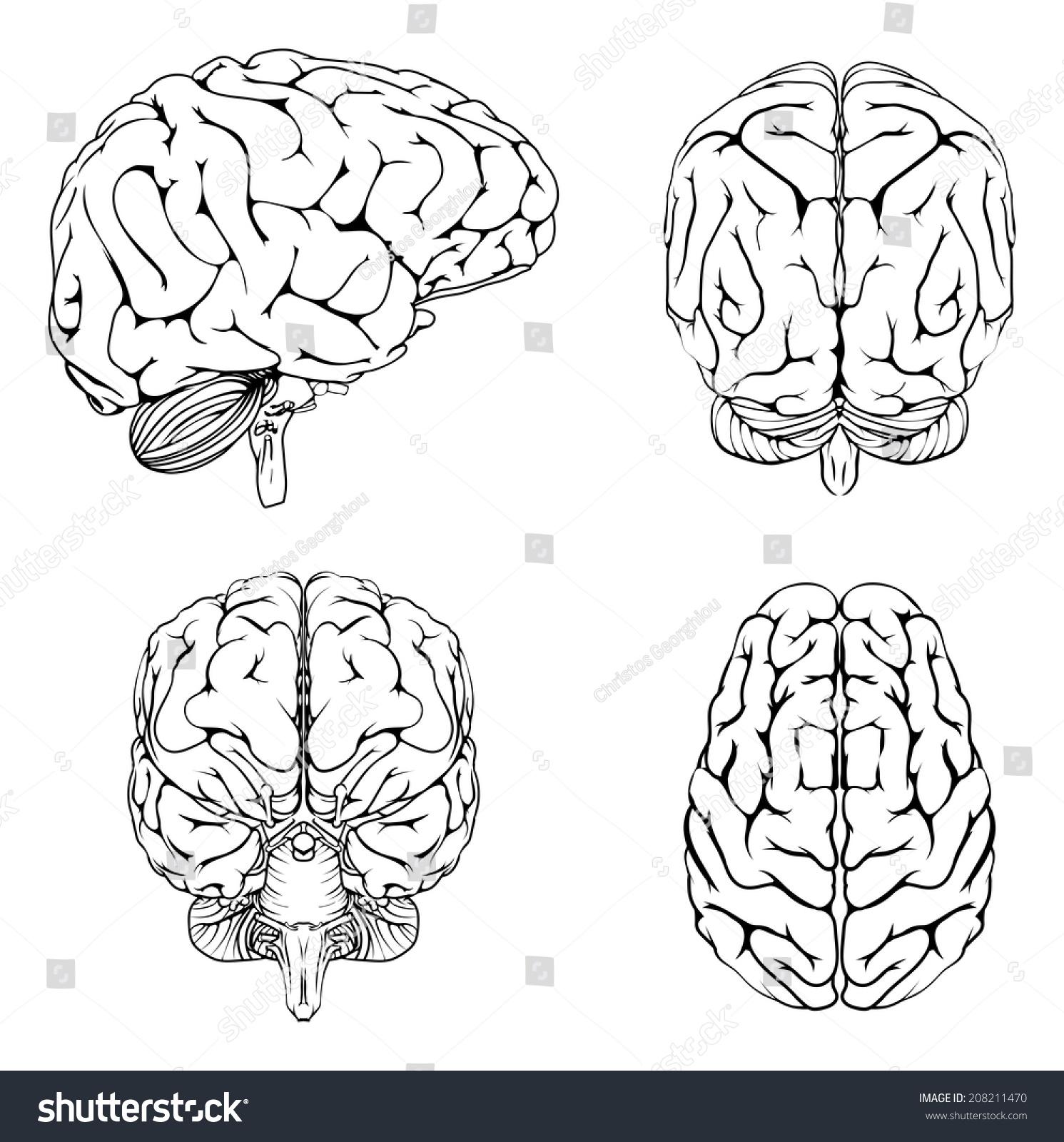 Diagram Brain Top Side Front Back Stock Vector