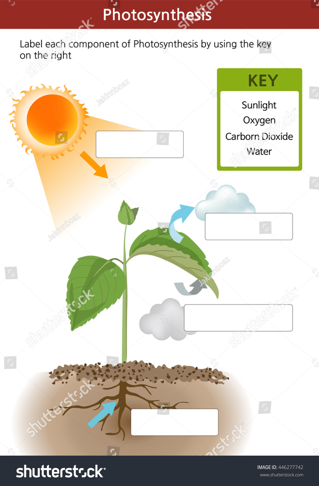 Photosynthesis Fill Blanks Worksheet Key On Stock Vector