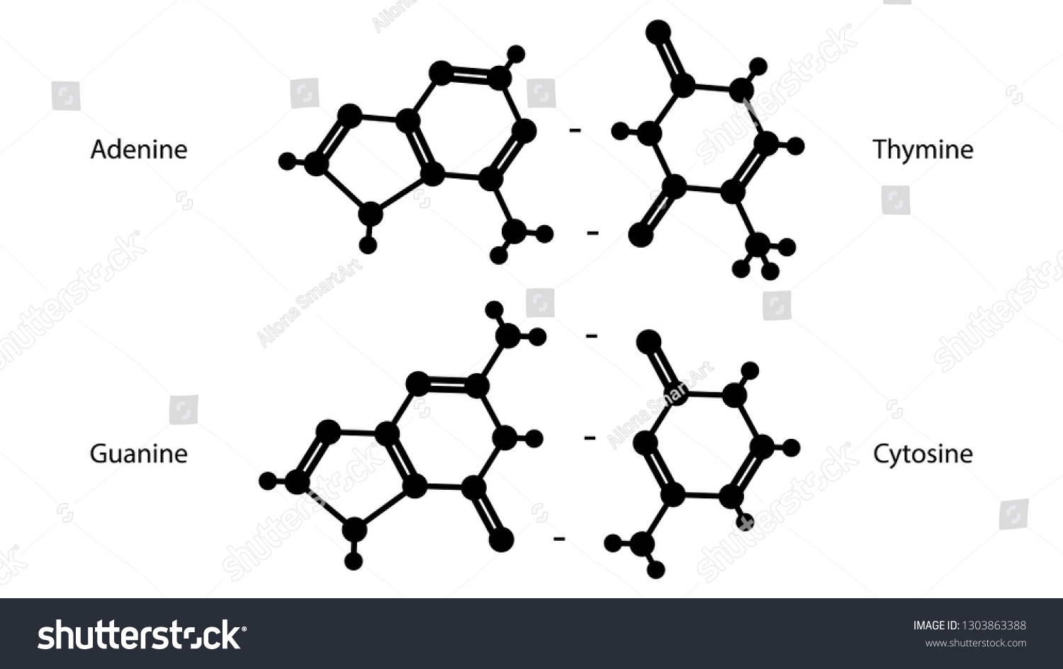 hight resolution of adenine guanine thymine cytosine molecular structure vector