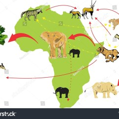 Simple Food Chain Diagram House Electrical Wiring In India African Savanna Web Animals