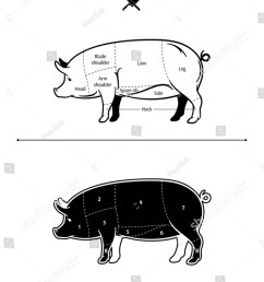 pig arm diagram wiring diagram log pig arm diagram [ 1044 x 1600 Pixel ]