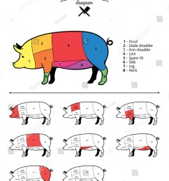 american us pork cuts diagram [ 1145 x 1600 Pixel ]