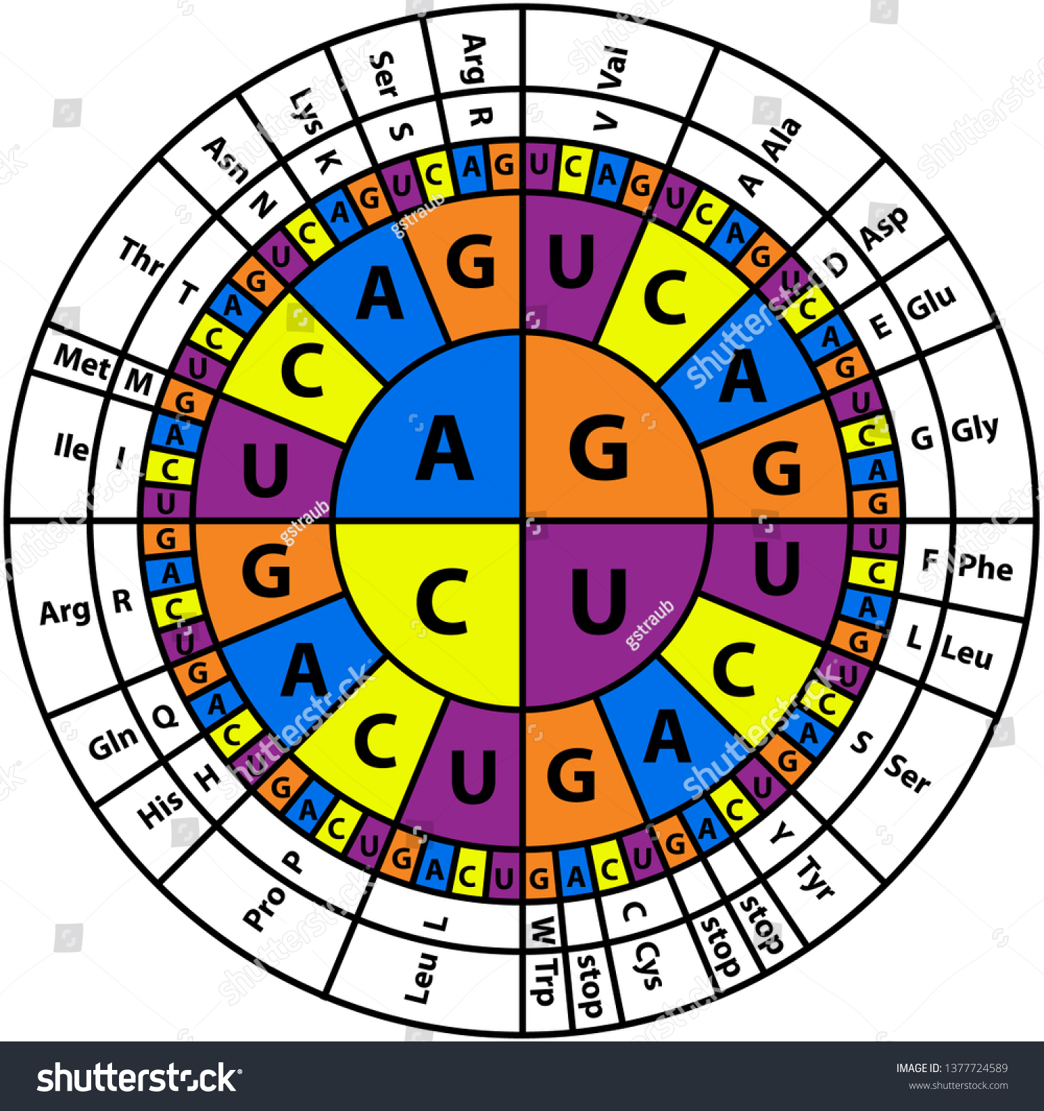 Amino Acids Sequence Chart