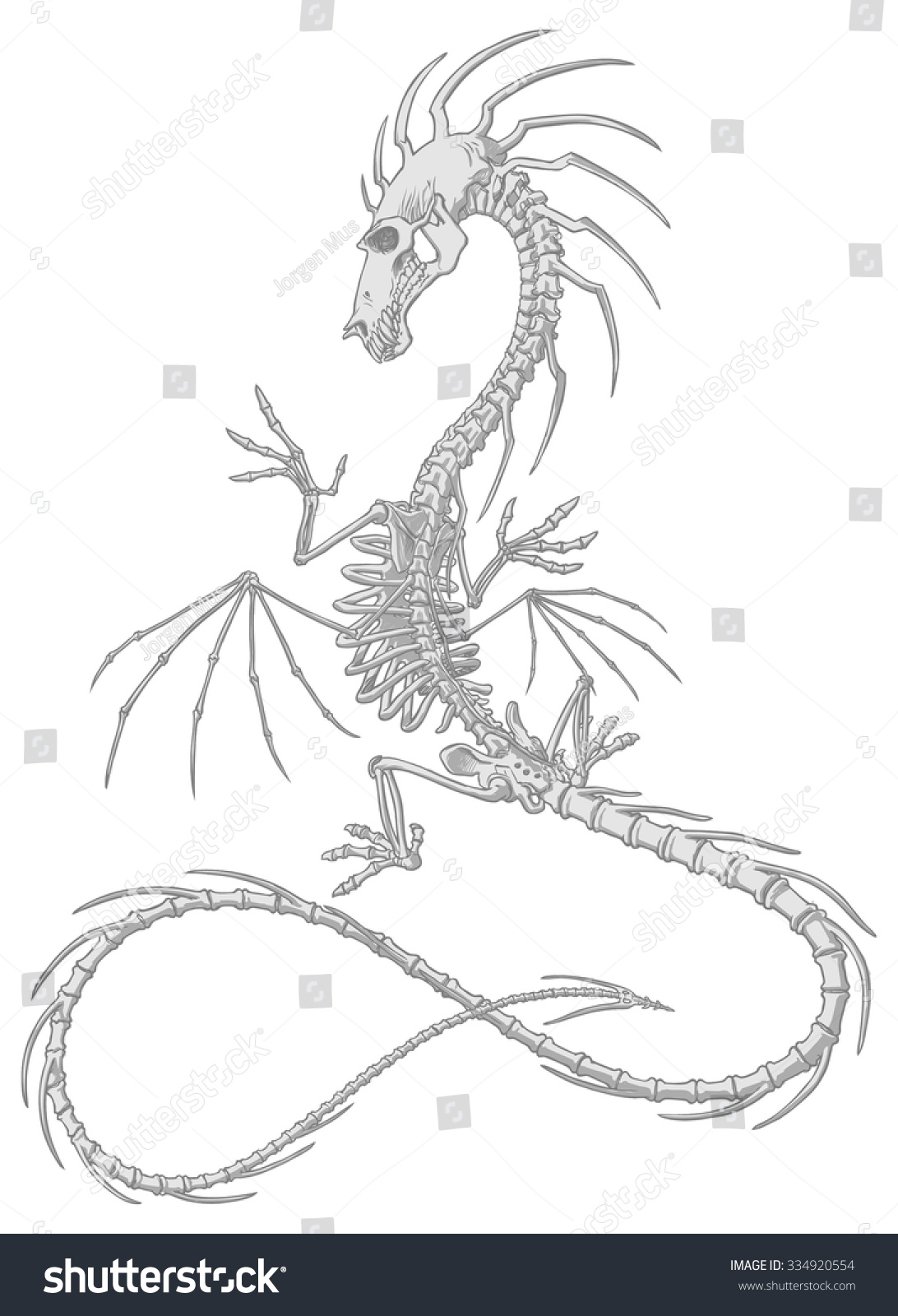 Dragon Skeleton Drawing : dragon, skeleton, drawing, Anatomically, Detailed, Dragon, Skeleton, Lively, Stock, Vector, (Royalty, Free), 334920554