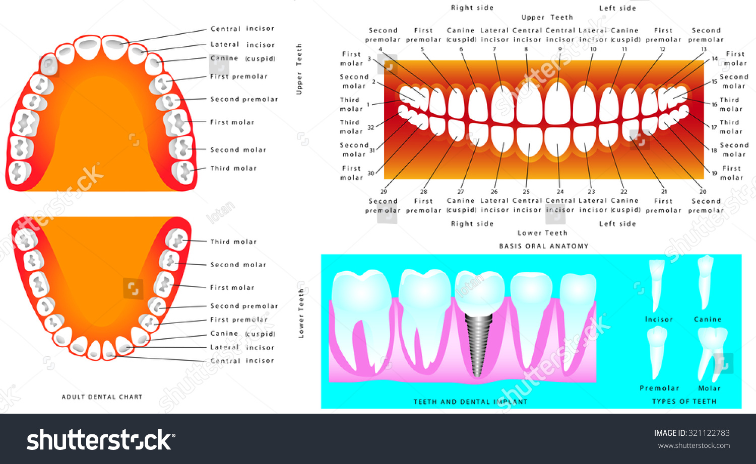 Basic Dental Charting Worksheet