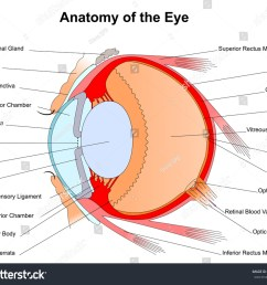 eye diagram rods conuses wiring diagram yer eye diagram rods conuses [ 1500 x 1312 Pixel ]