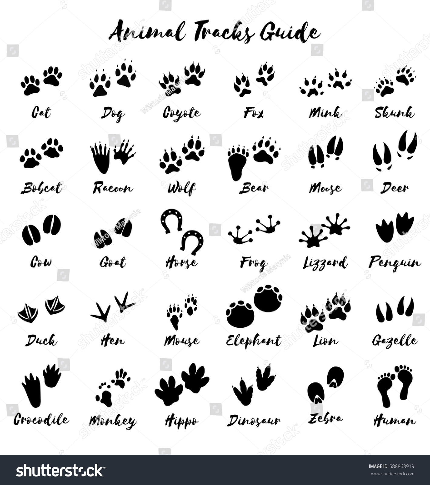 Animal Tracks Foot Print Guide Vector Stock Vector