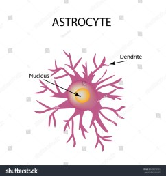 nerve cell infographics vector illustration on isolated background [ 1500 x 1600 Pixel ]