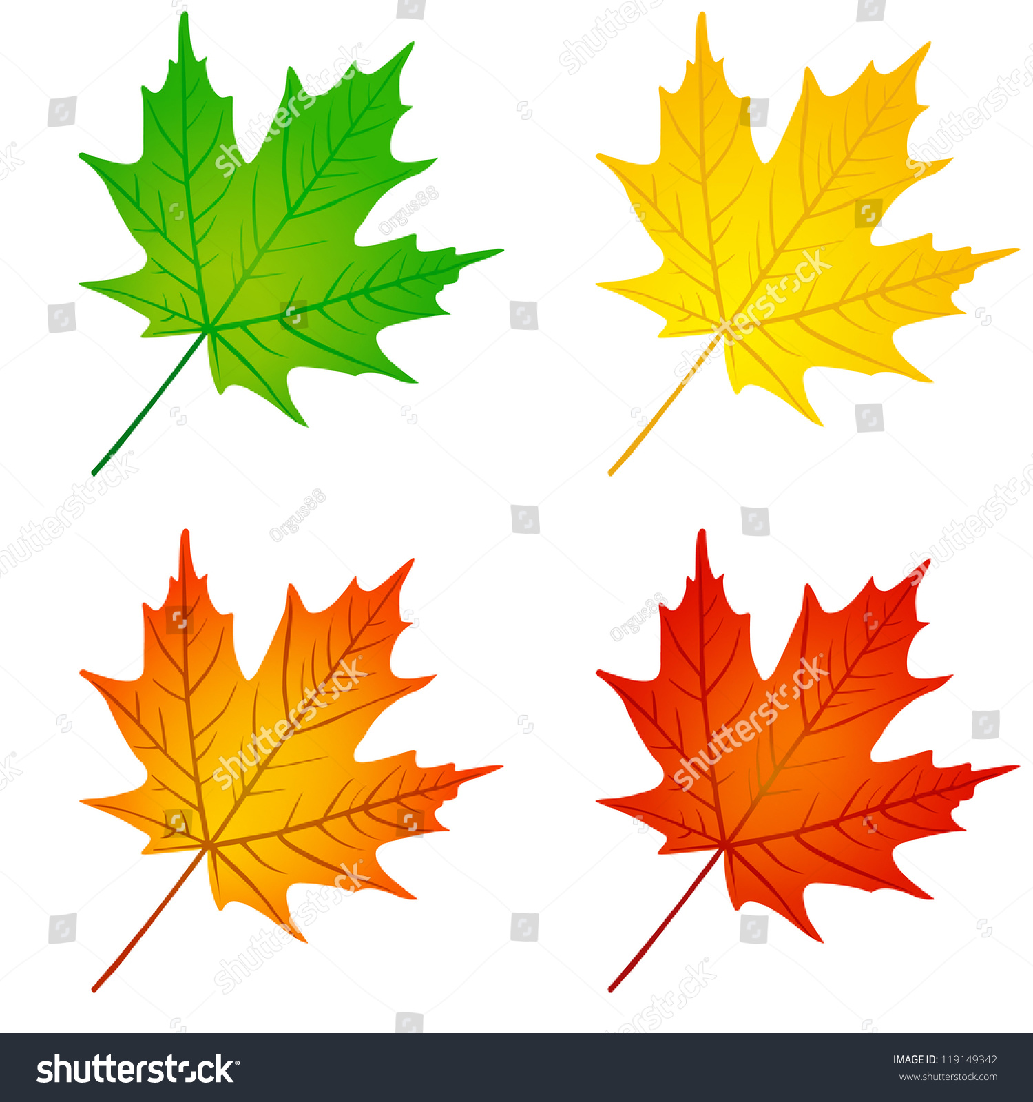Autumn Maple Leaf In Red Yellow Orange And Green Colors